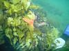 A sea star and a fluro nudibranch