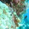 Bonaire 2010