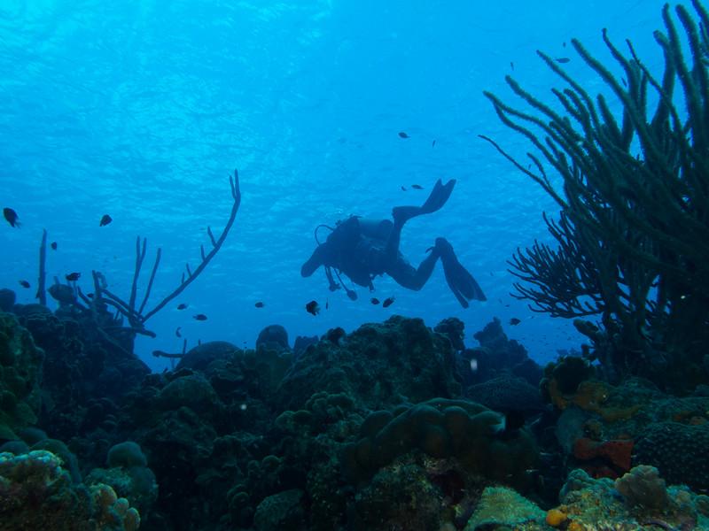 Bonaire 2014