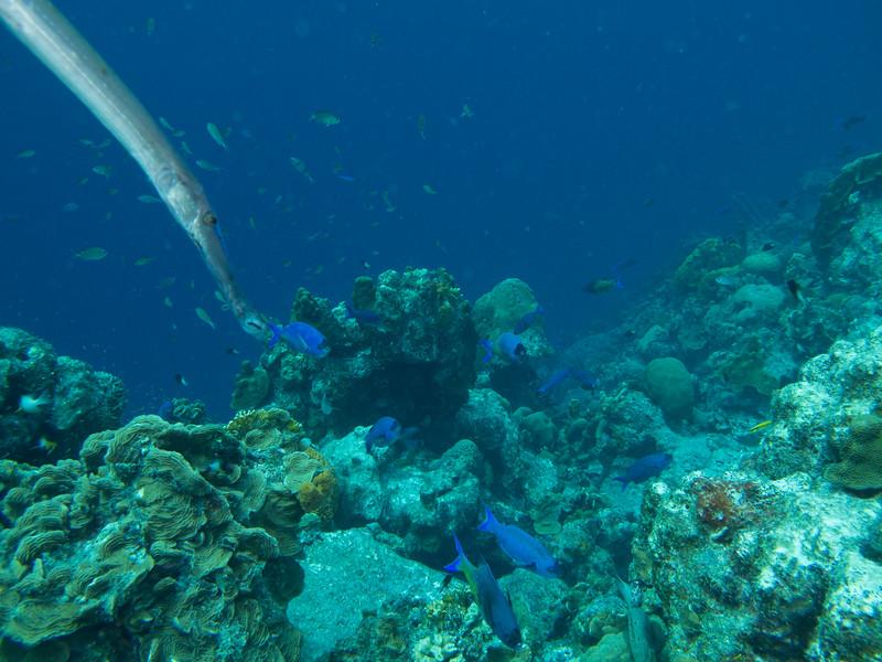Bonaire 2015