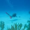 lionfish kill