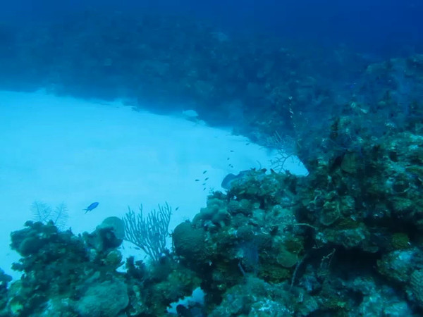 stingray hiding; and a cool file fish hanging out