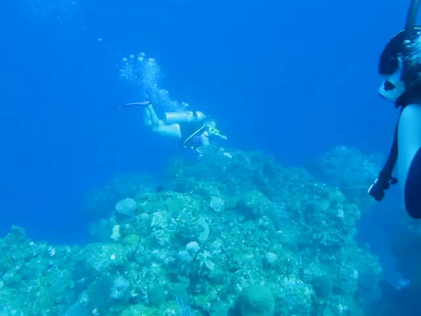 divemaster just leading the sea turtle