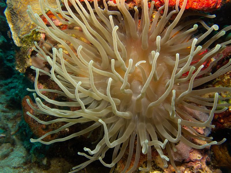 Dominica 2019 - Paradise Divers SCUBA