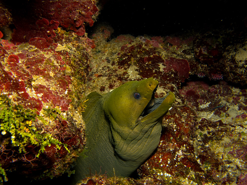 So many green eels trying to eat us