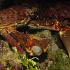 mmm. crab
