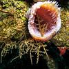 coral invasion