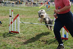 Dog Agility Competitions 2008 : Freehold, NJ