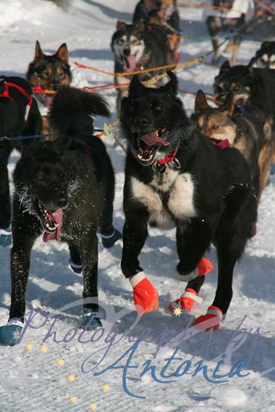 Iditarod 36