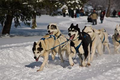 009/365: Punderson Classic Dog Sled Race [2010-01-09]