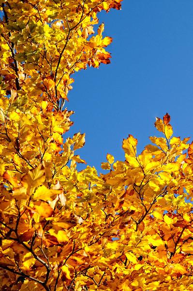 Lindeijer_2012-10-27_150742
