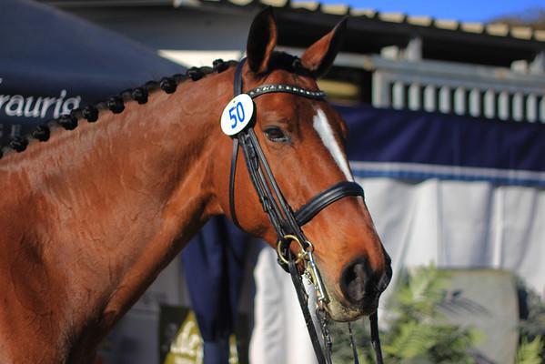 2014 03 08 Dressage Affaire - Del Mar Horse Show