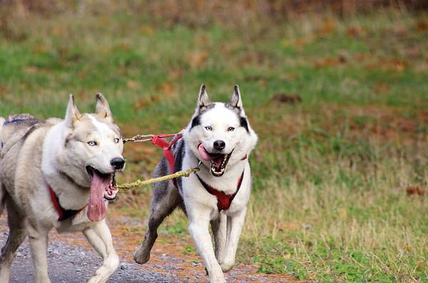 Mush Larose Dryland Race October 2011