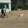 Saturday start relay, bikejoring with Luc