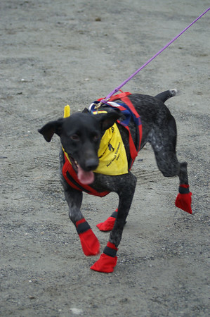 "2008 Norwich, VT ""dogrundog"" Canicross"