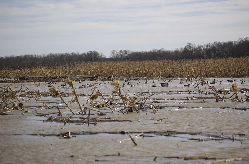 Duck Mafia Afternoon 8-Jan-2006 - 03