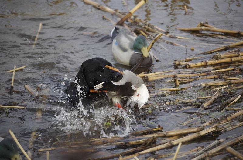 Duck Mafia Afternoon 8-Jan-2006 - 13