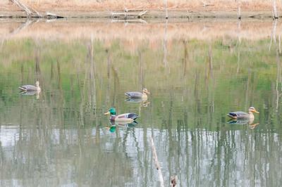 Duck Hunt 2012
