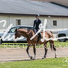 BRV Charity Horse show-8301