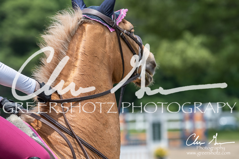 BRV Charity Horse show-8756