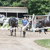 BRV Charity Horse show-8839