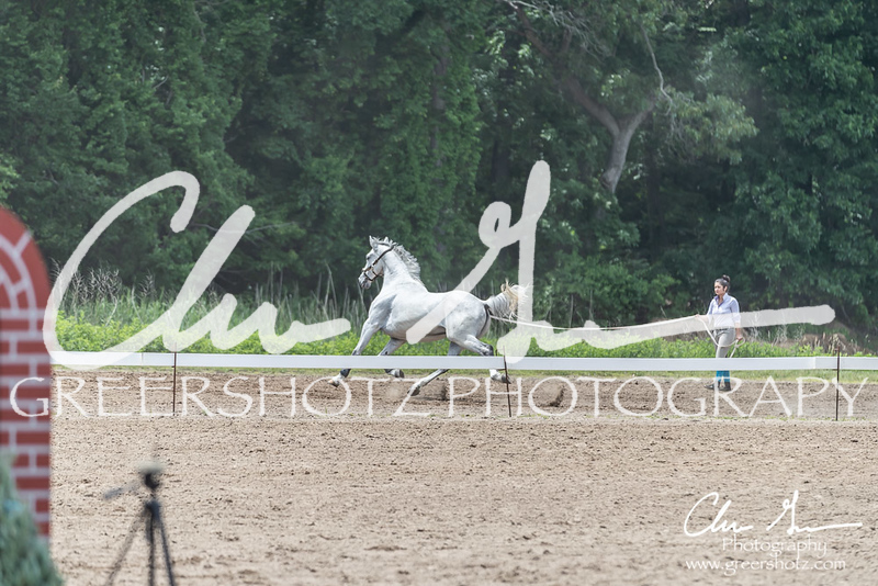 BRV Charity Horse show-9043