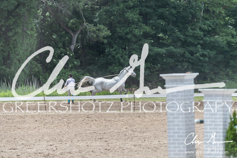 BRV Charity Horse show-9045