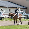 BRV Charity Horse show-8300