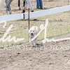 BRV Charity Horse show-8860