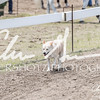 BRV Charity Horse show-8861