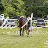 BRV Charity Horse show-8635