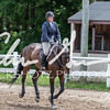 BRV Charity Horse show-8870