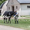 BRV Charity Horse show-8882