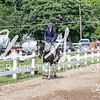 BRV Charity Horse show-9189