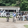 BRV Charity Horse show-8838