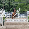 BRV Charity Horse show-9272