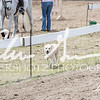 BRV Charity Horse show-8859