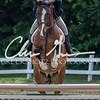BRV Charity Horse show-8461