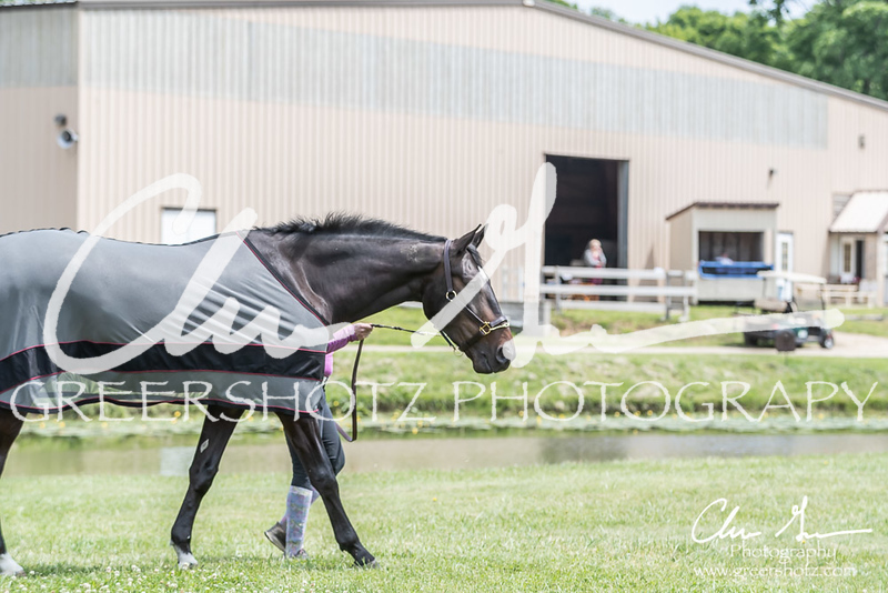 BRV Charity Horse show-8626