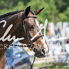 BRV Charity Horse Show - Saturday-9622