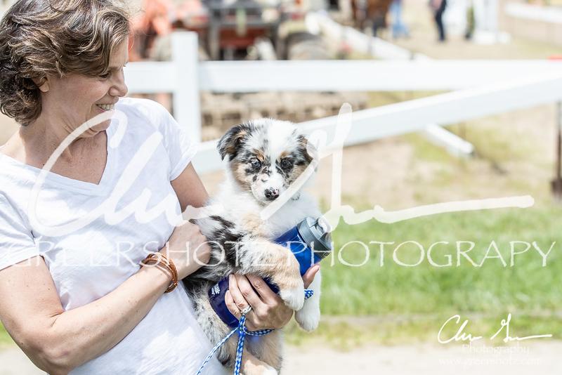 BRV Charity Horse Show - Saturday-9796
