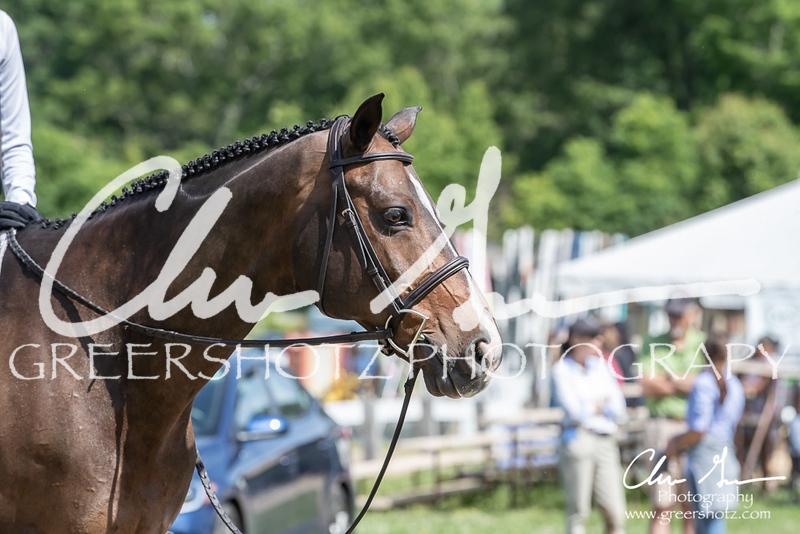 BRV Charity Horse Show - Saturday-9623
