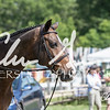 BRV Charity Horse Show - Saturday-9623