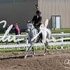 BRV Charity Horse Show - Saturday-9543
