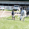 BRV Charity Horse Show - Saturday-9379