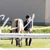 BRV Charity Horse Show - Saturday-9377
