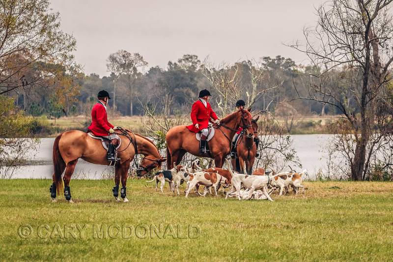 Middleton Place Hounds - fox hunt