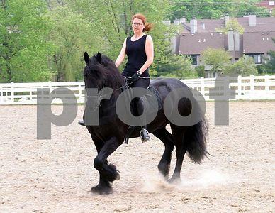 horse 6383