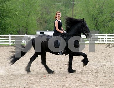 horse 6351
