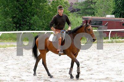 horse 0021